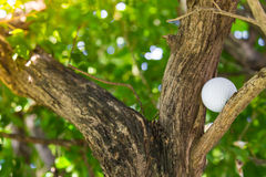 Golf ball in tree Royalty Free Stock Photos