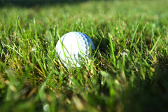 Golf ball on wet lush fairway Stock Image