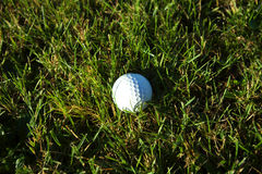 Golf ball on wet lush fairway Stock Photography