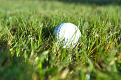 Golf ball on wet lush fairway Royalty Free Stock Images