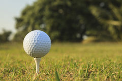 Golf ballGolf ball. Close up of golf ball on a tee  at sunrise on frosty morning.Close up of golf ball on a tee  at sunrise on frosty morning Royalty Free Stock Photography