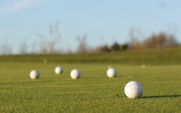 Golf balls. Group of white golf balls on the grass Stock Image