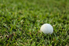 Golf balls on the green grass Royalty Free Stock Photography
