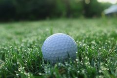 Golf balls on green lawns in beautiful golf courses royalty free stock photos