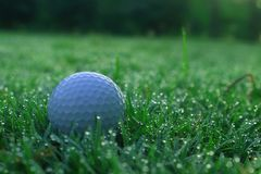 Golf balls on green lawns in beautiful golf courses stock image