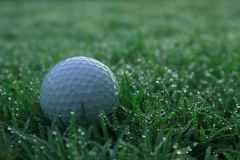 Golf balls on green lawns in beautiful golf courses stock images