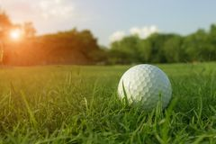 Golf balls on green lawns in beautiful golf courses royalty free stock photography