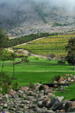 Golf bench landscape. Vertical view of fairway and vineyards on Western Cape Golf Course Royalty Free Stock Photos