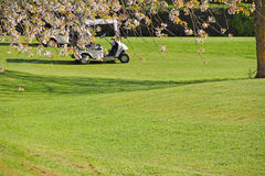 Golf cart on course Stock Photos
