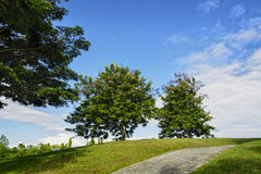 Golf Cart Path. An uphill golf cart path in a golf course Royalty Free Stock Photo
