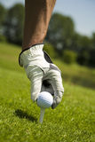 Golf club. Golfer arranging the ball on the tee Stock Photography