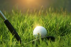 Golf club and golf ball on green grass in the evening golf course with sunshine. In thailand royalty free stock image