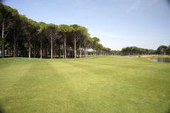 Golf club, green grass Royalty Free Stock Photos