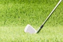Golf club on green grass Stock Image
