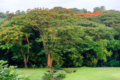 Golf club at the Philippines Royalty Free Stock Photos