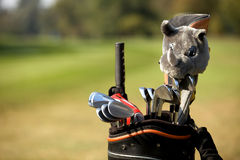 Golf clubs in bag at golf course, Stock Photography