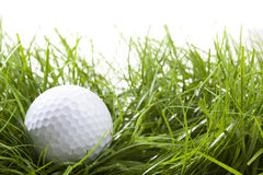 Golf concept. Golf ball hidden in high grass (rough Royalty Free Stock Images