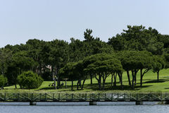 Golf Course. Landscape of a golf course Stock Image