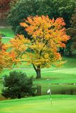 Golf Course. Green in autumn Stock Photography