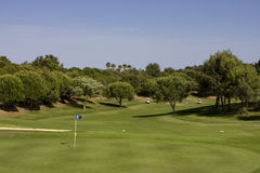 Golf Course. Between pine trees with players Royalty Free Stock Photo