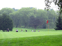 Golf course. Green golf course in spring Stock Images