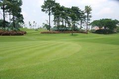 Golf course. The green grass in a golf course Stock Photos