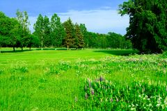 Golf course. Beautiful green golf course in Sweden. This is a lovely day in the beginning of summer, the grass and leaves have fresh colors of emerald green Stock Photos