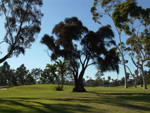 Golf Course. Trees on Coronado Island golf course Royalty Free Stock Images