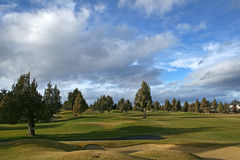 Golf course. With junipers and nice sky Stock Images