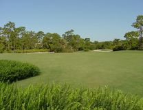 Golf Course. With Ferns Royalty Free Stock Photo