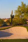 Golf course in the Arizona desert. With mountains in the late afternoon sun Stock Image