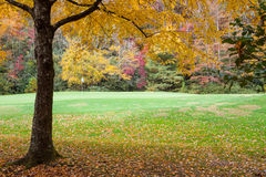 Golf Course in Autumn Royalty Free Stock Photography