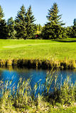 Golf Course in Autumn. The fall colors of autumn surround the greens of the golf course Stock Photo