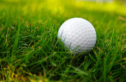 Golf course ball Royalty Free Stock Image