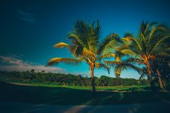 Golf course. Beautiful landscape of a golf court with palm trees Stock Photo