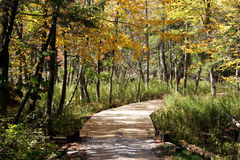Golf Course Cart Path in Fall stock images