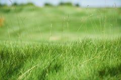 Golf course closeup. Big green golf course closeup. selective focus Stock Image