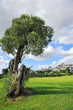 The golf course, Costa del Sol, Andalusia, Spain Royalty Free Stock Photography