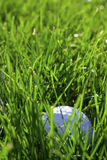 Golf course detail. With the ball Royalty Free Stock Image