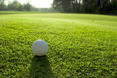 Golf course detail. With the ball Royalty Free Stock Photography