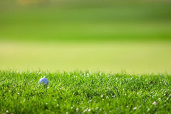 Golf course detail. With the ball Royalty Free Stock Photos