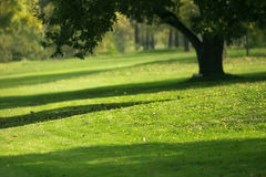 Golf course detail. Beautiful landscape Royalty Free Stock Photography