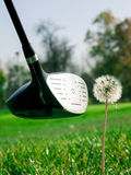 Golf course detail. Stick hitting the dandelion Royalty Free Stock Image