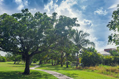 Golf course in Dominican republic. field of grass Royalty Free Stock Photos