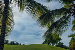 Golf course in Dominican republic. field of grass Royalty Free Stock Images