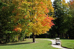 Golf Course in Fall royalty free stock photo
