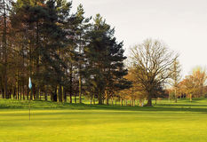 Golf course and flag. Golf course in evening winter sunshine (long shadows royalty free stock image