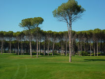 Golf course forest in Turkey Royalty Free Stock Image