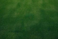 golf course green grass texture Royalty Free Stock Images