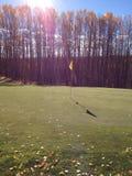 Golf course green Royalty Free Stock Photos